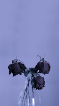 枯萎 凋零 花 玻璃瓶 紫色 凋谢