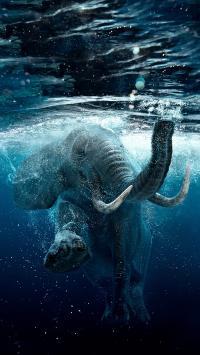 大象 游泳 水滴 尖牙 象牙
