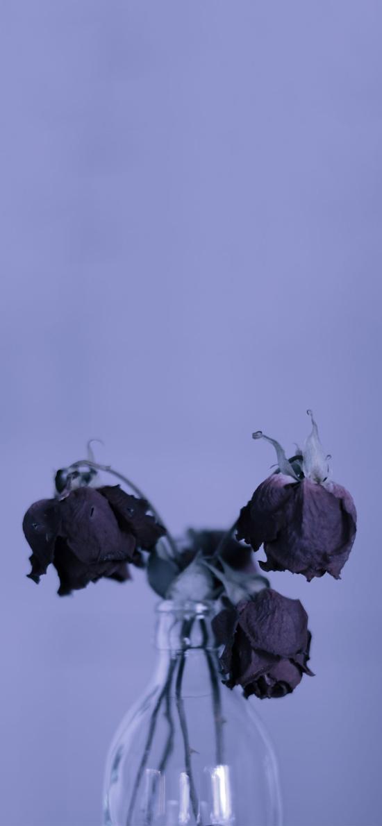 枯萎 凋零 花 玻璃瓶 紫色 凋謝