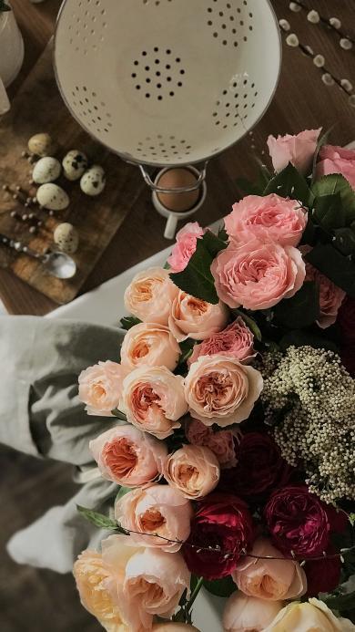 鲜花 粉色 藤本月季 绽放