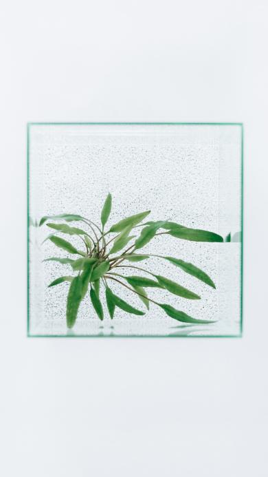 玻璃 枝叶 清新 观赏