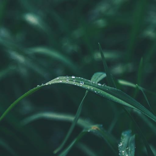 叶子 绿色 小草 水珠 露水