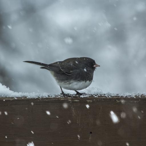 鸟 栖息 下雪 羽毛