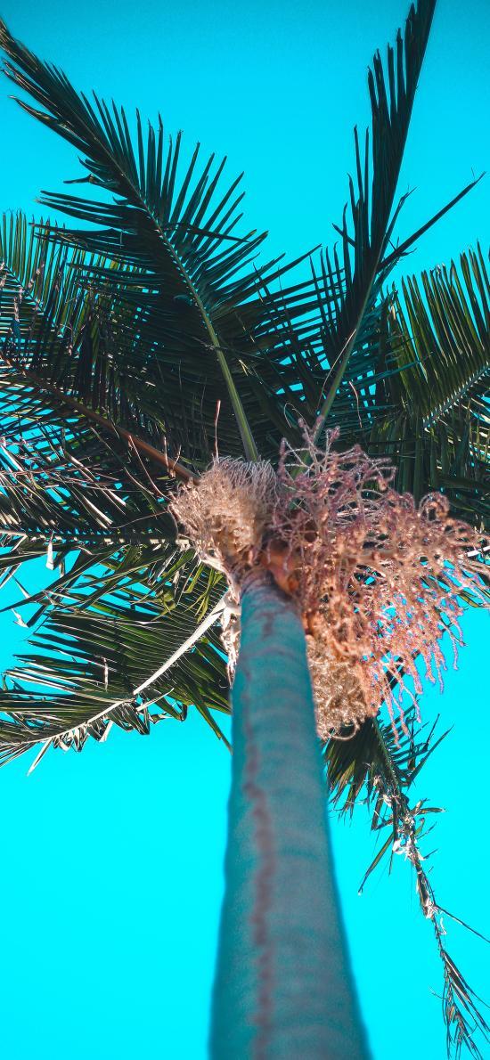 椰树 耸立 树叶 天空