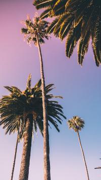 棕榈 椰树 枝干 树木