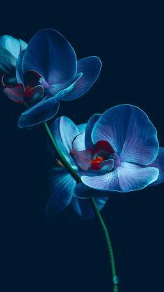 兰花 鲜花 盛开 唯美 黑色