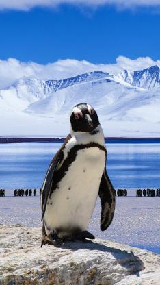 企鹅 南极 冰川 可爱