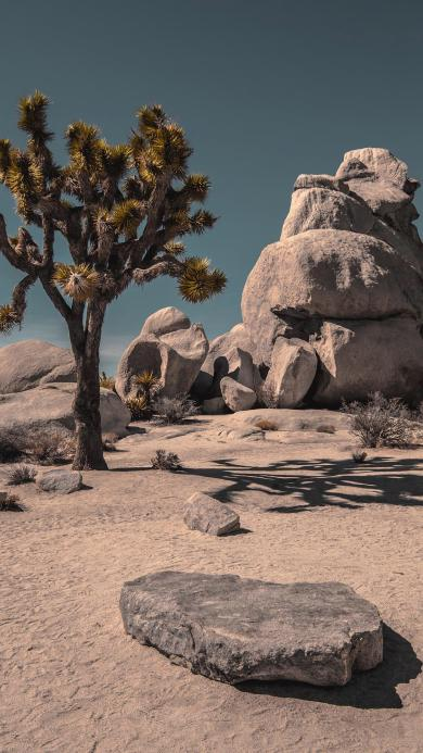 荒漠 石头 戈壁 植被 树木 沙子