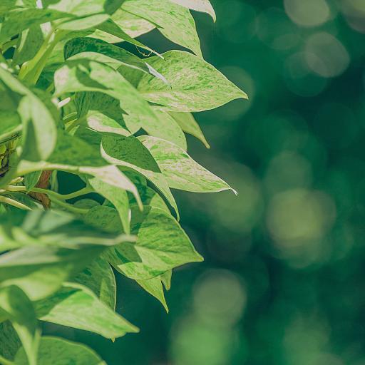 叶子 绿色 阳光 枝叶