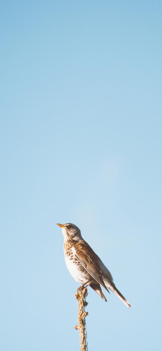 鸟类 站立 枝头 蔚蓝