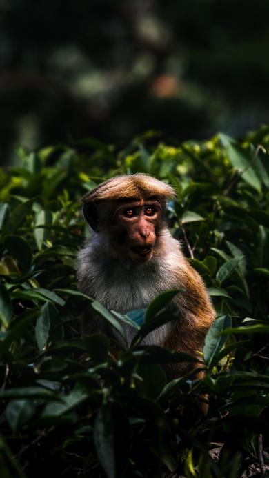 猴子 猿类 树丛 毛发 中分