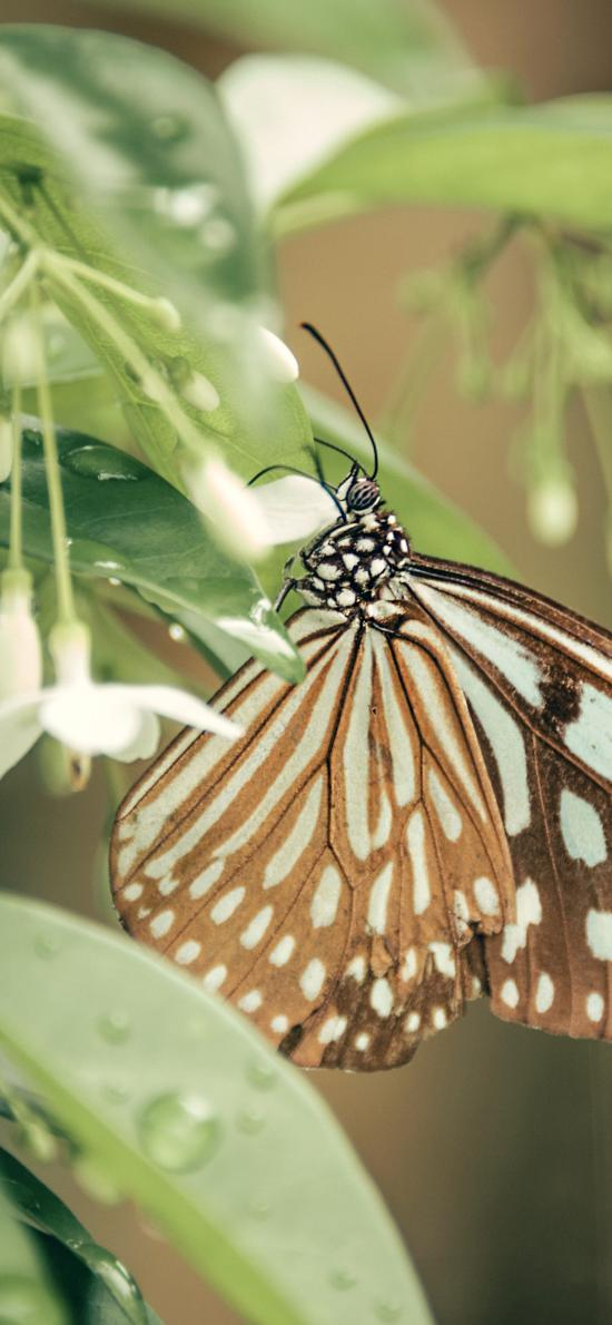 蝴蝶 昆虫 枝叶 粉翅