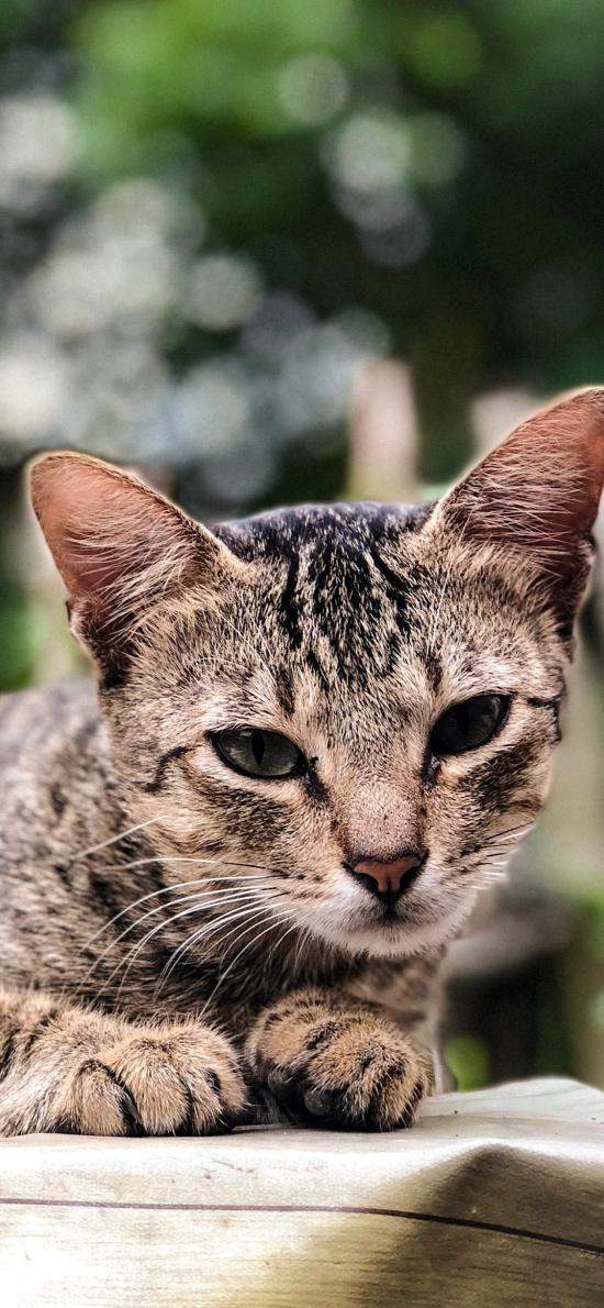 猫咪 皮毛 宠物 乖巧