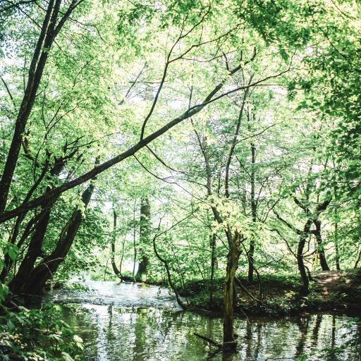 树林 河水 绿意葱葱