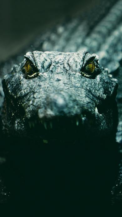 水陆两栖 鳄鱼 食肉动物