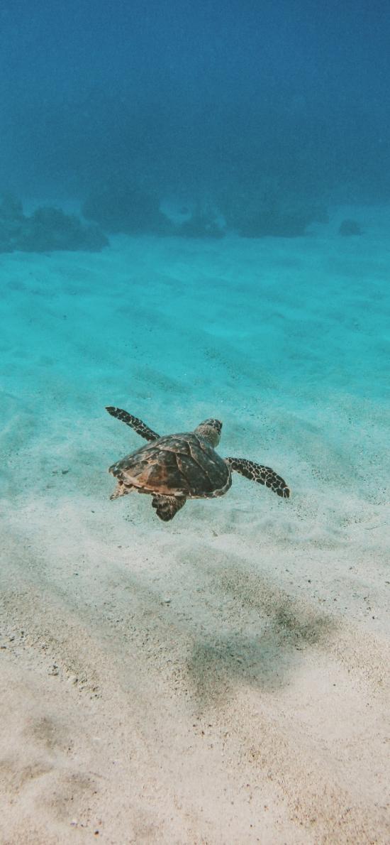 海龟 海底 游动 沙地