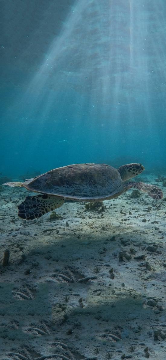 海洋生物 海龟 龟壳 沙子