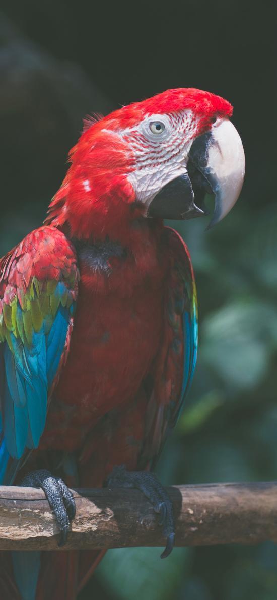 鹦鹉 鸟类 树枝  羽毛 鲜艳