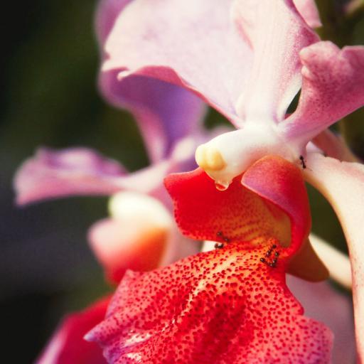 花朵 螞蟻 鮮花 蘭