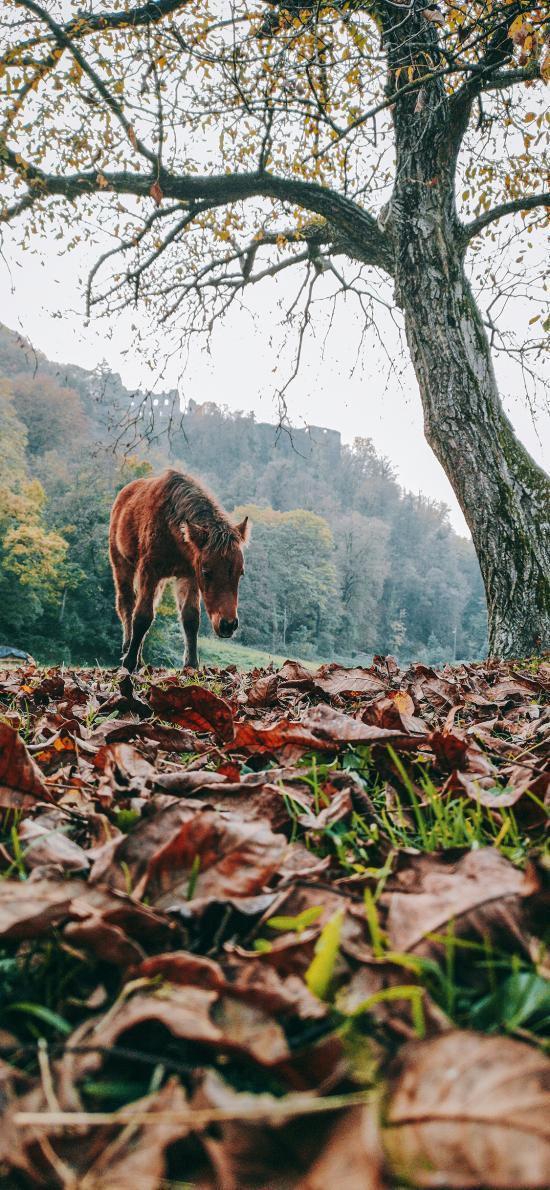 马匹 大暑 落叶 枯黄 秋季