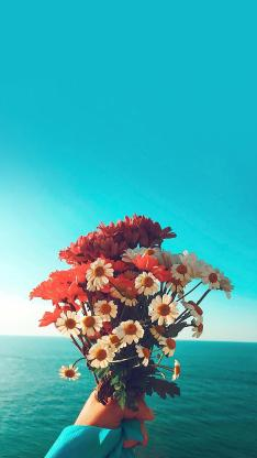 花束 鲜花 小雏菊 白色