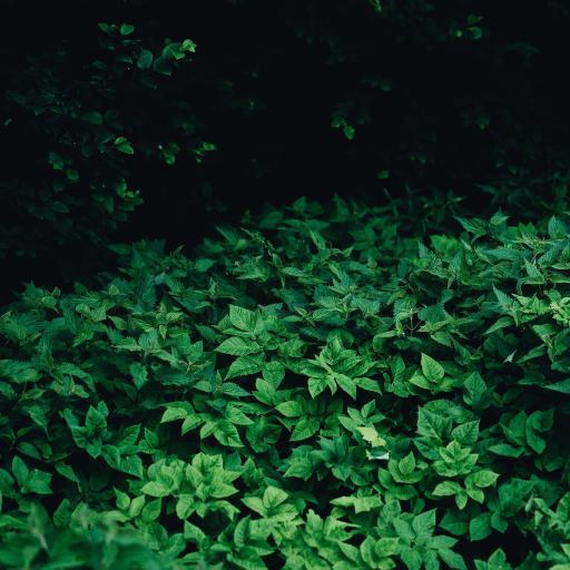 葉子 綠色 植被 樹葉