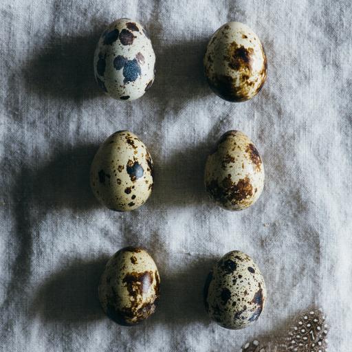 鸟蛋 鹌鹑蛋 羽毛 斑驳