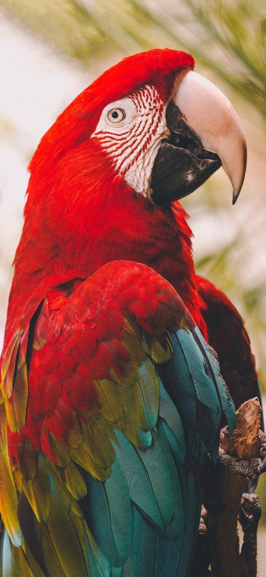 飞鸟 鹦鹉 彩色 聪明
