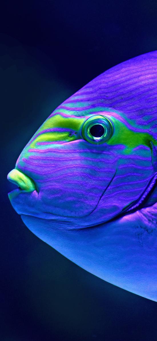 鱼 海洋生物 渐变 发光