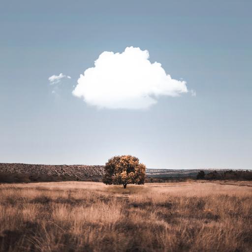郊外 白云 树木 草丛 自然美景