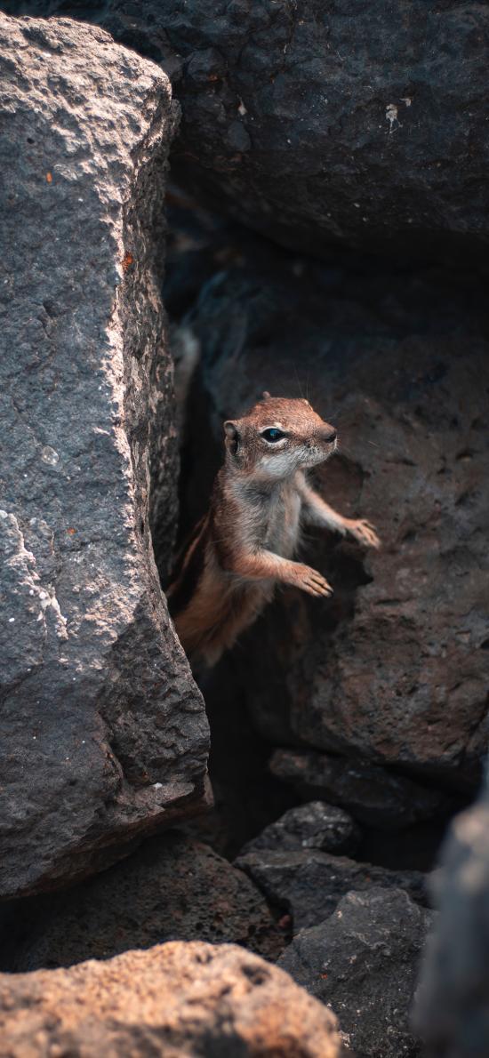 松鼠 石缝 岩石 躲避