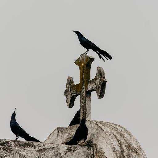 乌鸦 教堂 鸟类 站立 昏暗