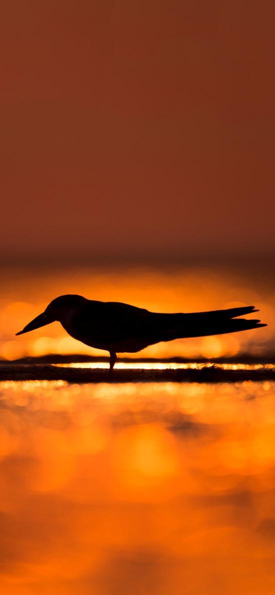 海滩 夕阳 飞鸟 逆光