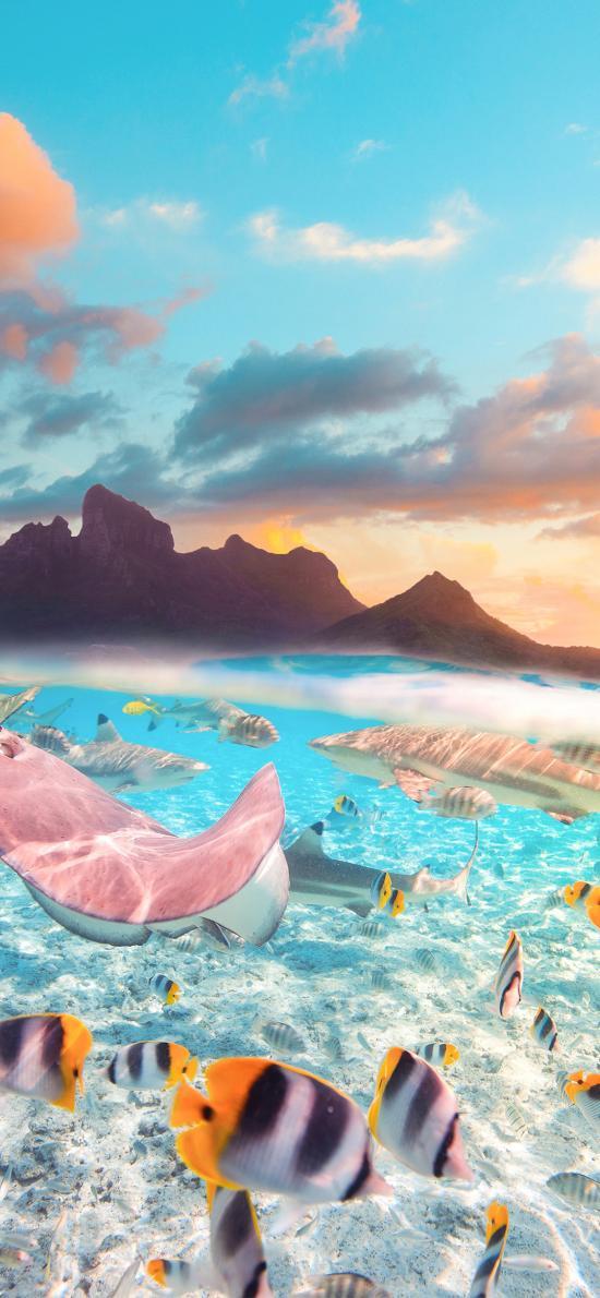 鱼群 海洋生物 海水 清澈