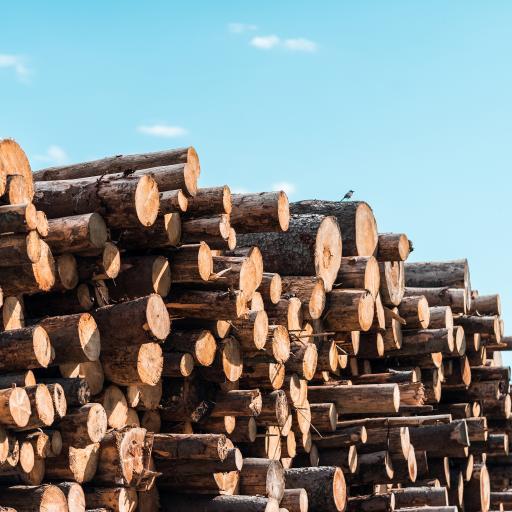 木材 树干 堆放 蓝天