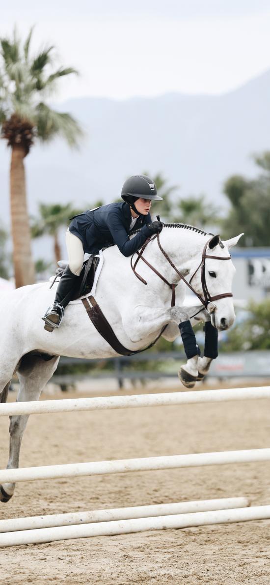 赛马 跨栏 矫健 竞技 骑马