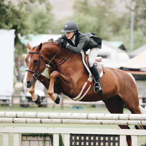 赛马 竞技 运动 马匹