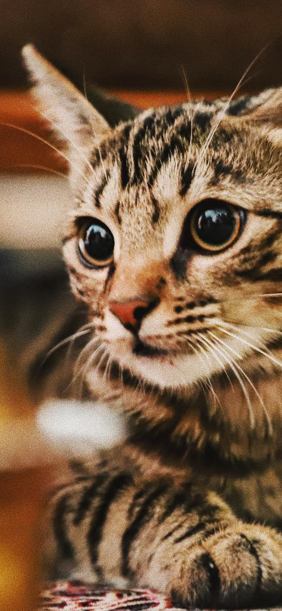 猫咪 可爱 宠物 皮毛