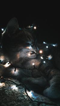 宠物 猫咪 灯光 黑暗
