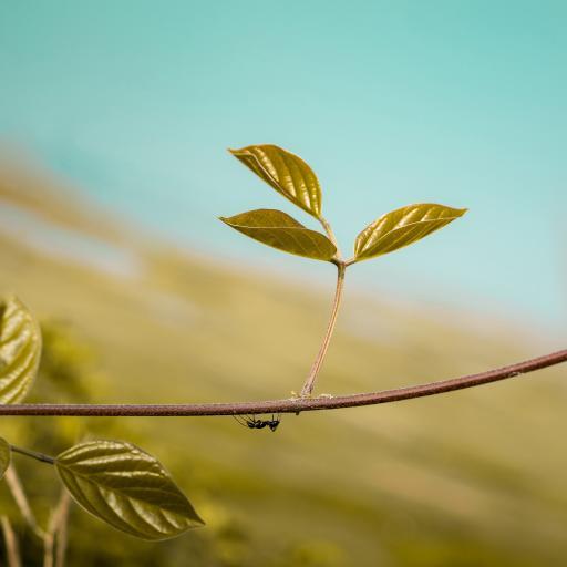 植物 綠芽 生命 螞蟻