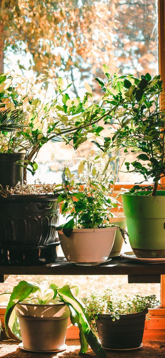 盆栽 绿植 室内 花盆