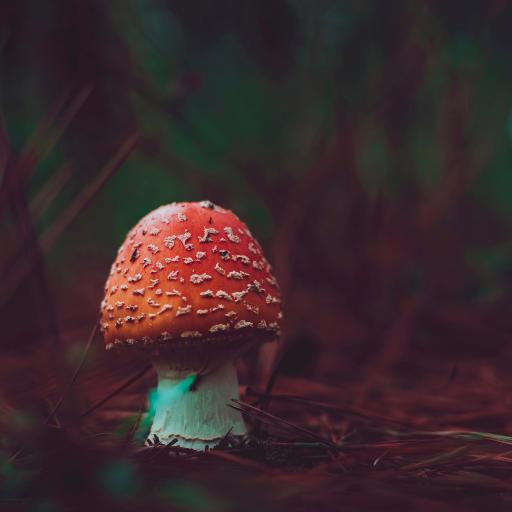 潮濕 陰暗 菌類 蘑菇 紅菇