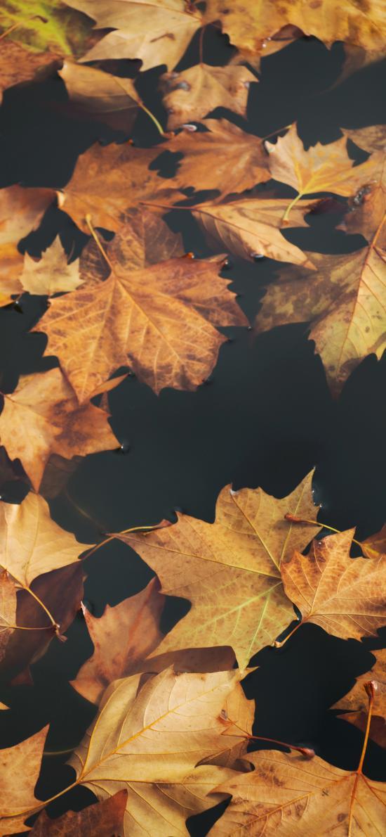 落叶 枯黄 水面 枫叶