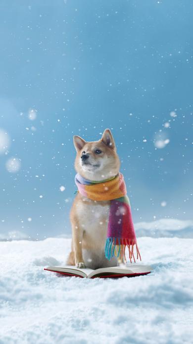 雪地 宠物狗 日本 柴犬 围巾