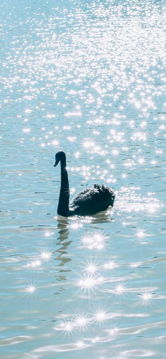 天鵝 波光粼粼 湖水 藍色 唯美