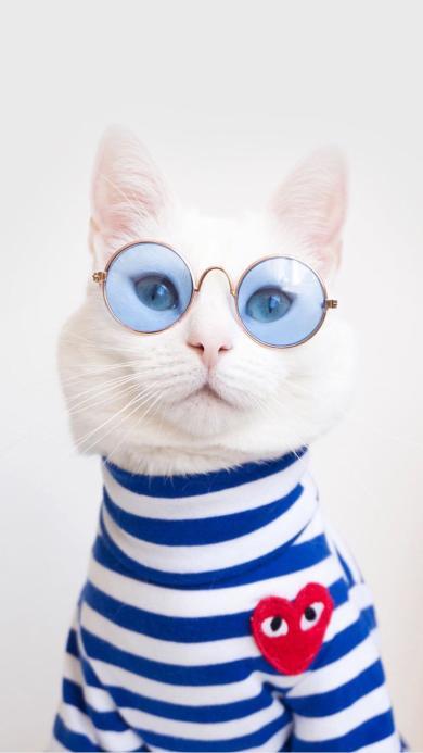 猫咪 宠物 眼镜 衣服 服饰