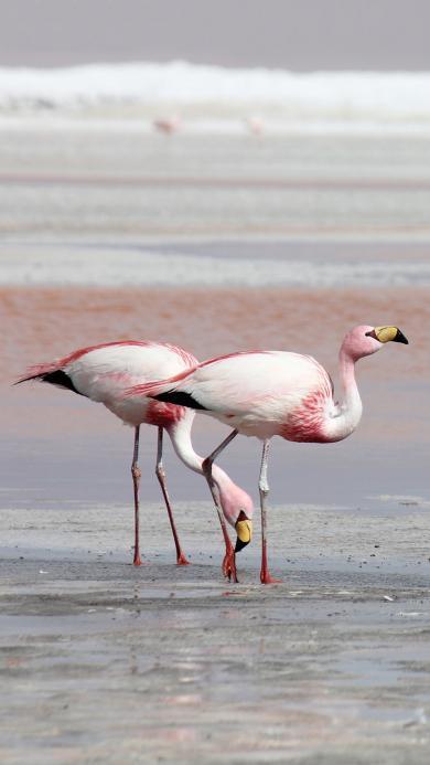 海滩 保护动物 火烈鸟 粉色 长腿