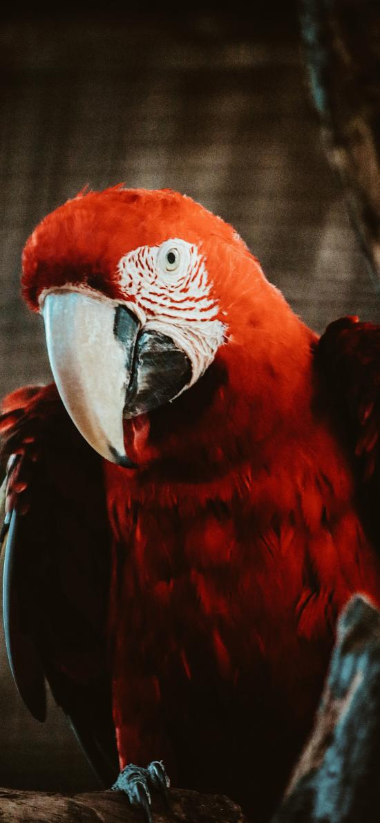鸚鵡 鳥類 羽毛 鮮艷