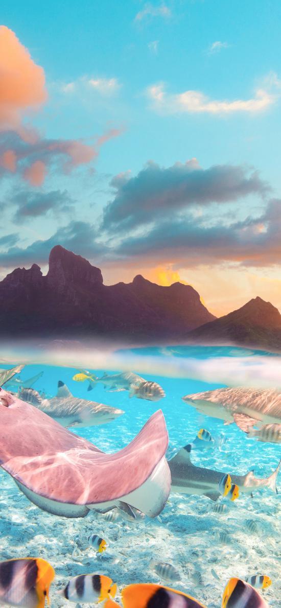 大海 海洋生物 鱼类 海天 山体 天空