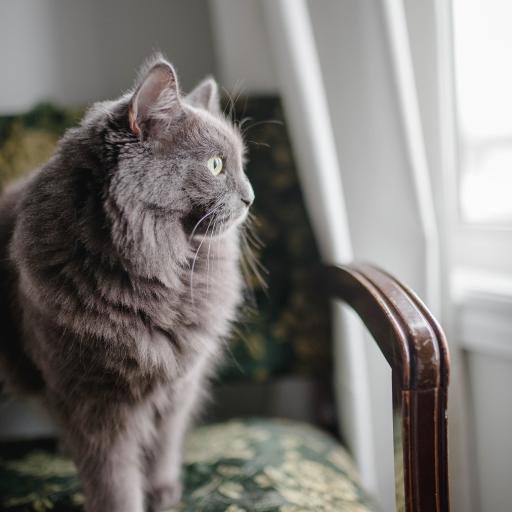 猫咪 椅子 灰猫 站立